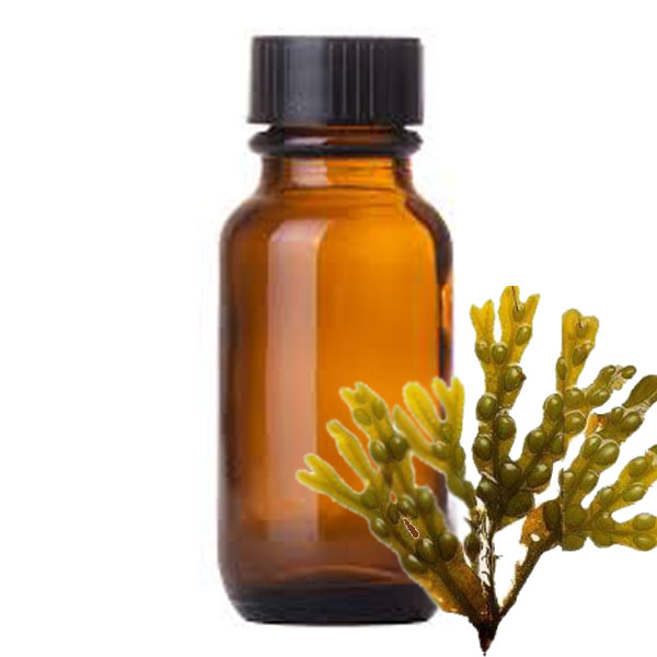 Andes Organics Pure Fucus Oil, 1000 ml